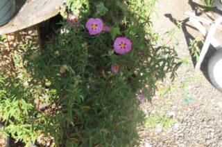 castro landscaping 3