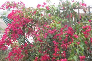 castro landscaping 5