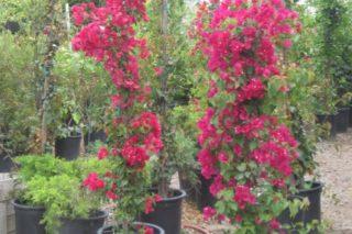 castro landscaping 6