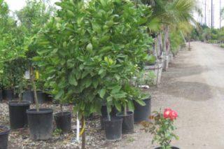 castro landscaping 7