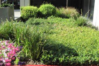castro landscaping 8