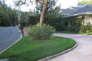 castro landscaping 9